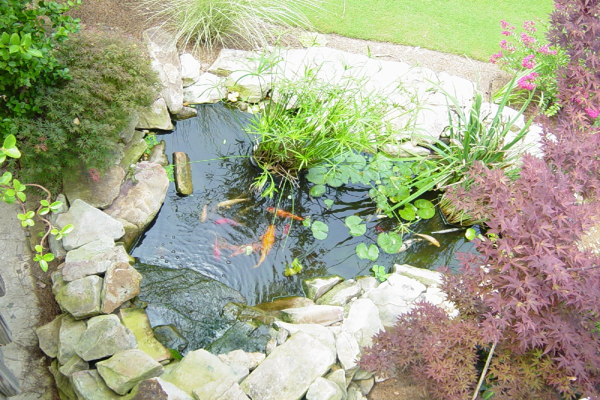 Koi pond for Backyard koi fish pond