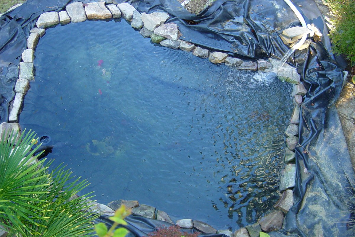 Image gallery water pond for Koi pond labradors