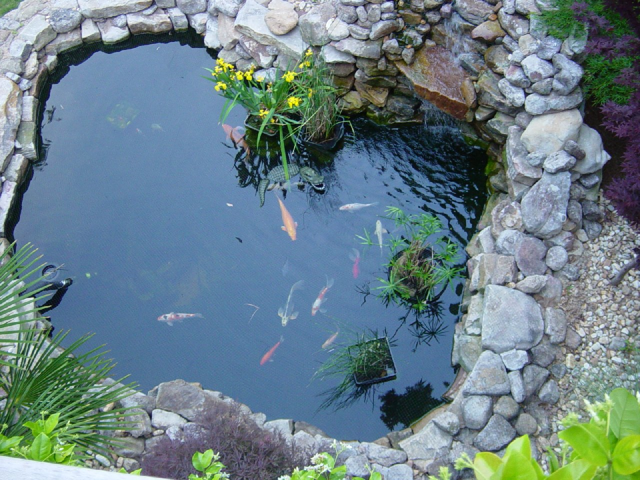 Koi pond for The backyard pond